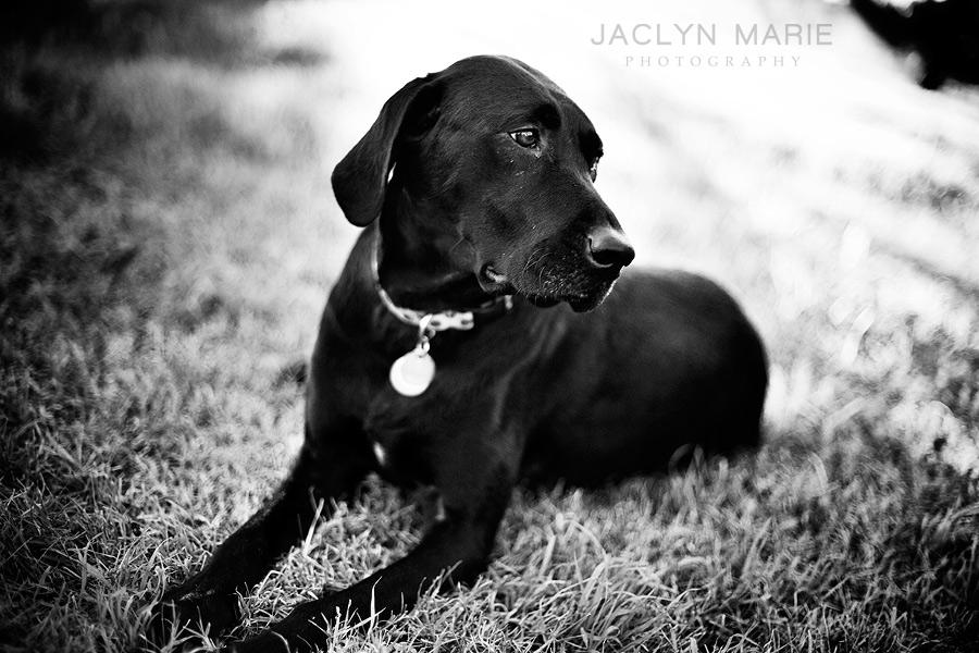 Dog, pet photography in Wichita, Kansas