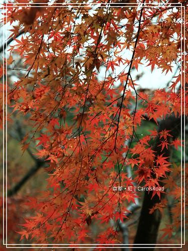 2009-12-11 京都 063 R
