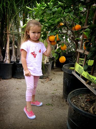 naughty orange snatcher