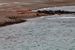 baudchon-baluchon-pinguins-7