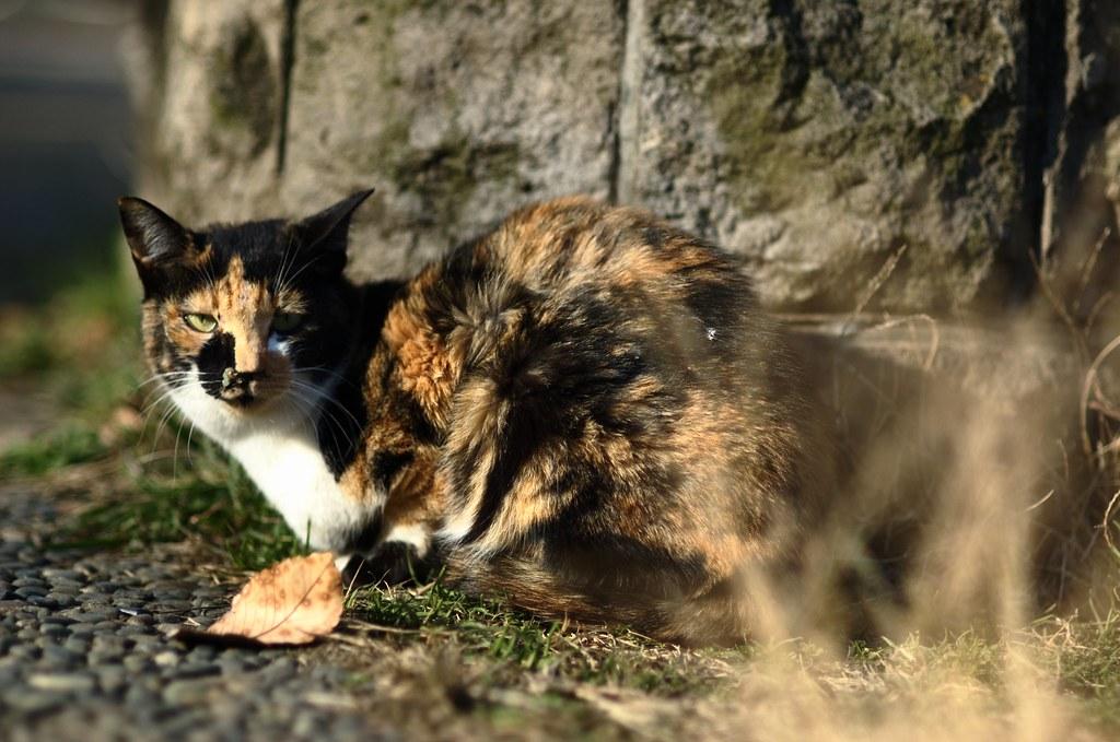 冬の猫達 #12