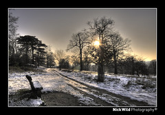 Merry Christmas - Richmond Park 2009 (Nick Wild Photography) Tags: park christmas new wood xmas winter light sunset sky sun mist snow cold tree forest dark bench walking happy photography evening frost day view mud dusk path walk year great parks freezing richmond surrey heath sit snowing rays through merry 2009 hdr