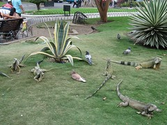 Ecuador Guayaquil, 28 Dec 2009