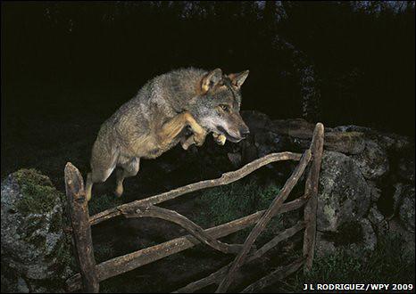 Casa di velocità di lupo datazione