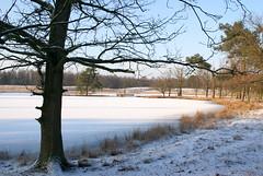 Vrozen lake (Sabine777) Tags: winter lake snow holland nature skating frozenlake ossendrecht winterinholland