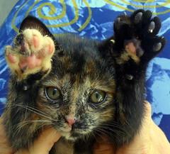 Ateno: altssima voltagem de fofura na rea!!! (Bia P) Tags: cats cute animal animals cat kitten kitty gatos gato purr