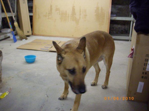Dog Found in Glenolden