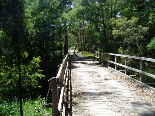 One of the many bridges on the Warburton trail