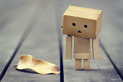 Gazing (Antty+) Tags: brown dead toy japanese leaf singapore moody sad box dry orchard boring cardboard slack jurong bishan danbo danboard antty antontang