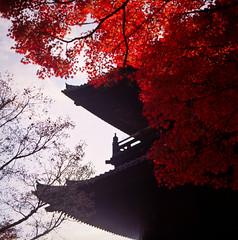 (yocca) Tags: autumn red film leaves t temple leaf kyoto fuji hasselblad momiji japanesemaple  velvia100  2009 nanzenji 500cm carlzeiss    plannar nov2009