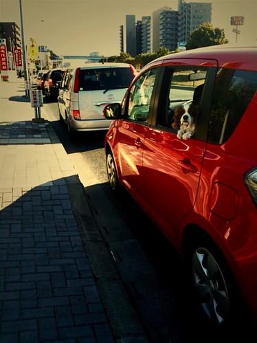 赤い車でドライブ