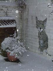 Pussy gets cold (id-iom) Tags: uk england urban snow cold london cat graffiti stencil kitten paint sad graf pussy spray vandalism mann brixton manx 3legs idiom