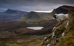 Precariously balanced (Kenny Muir) Tags: skye landscape scotland sheep blackface ewe quiraing a900 quiraingskyelandscapesheep