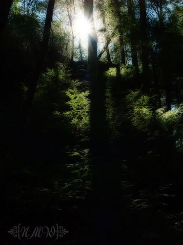 Sunflare 14/365
