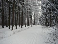 Geyerscher Wald (Suppenländer) Tags: schnee winter snow landscape geotagged deutschland sachsen wald deu erzgebirge langlauf geyer loipe geo:lat=5063555358 geo:lon=1290638208