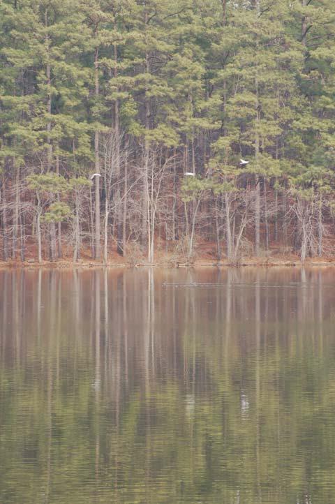 Johnson Lake View 1