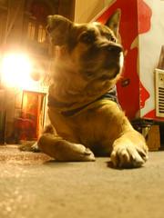 Mi Terreno (es.la.mania) Tags: dog myplace guardian myland milugar miterreno