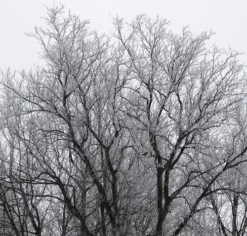 Ice Tree with Crow