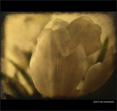 flower bokeh (die minimalistin) Tags: flowers flower texture bokeh overlay layers textured laver texturized