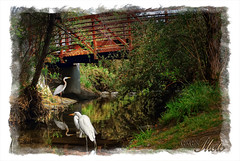 egrets under the bridge (Kris Kros) Tags: bridge art photoshop bravo touch under kris paparazzi hdr kkg egrets the cs4 photomatix kros kriskros 1xp joe1027 kkgallery
