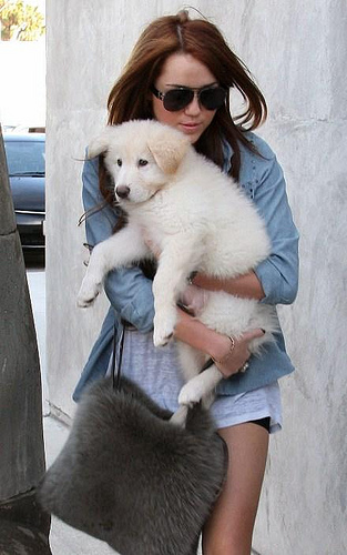 Miley-Cyrus-Puppy-Mate