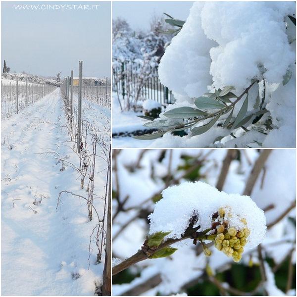 viti-olivo-bocciolo lillà bianco