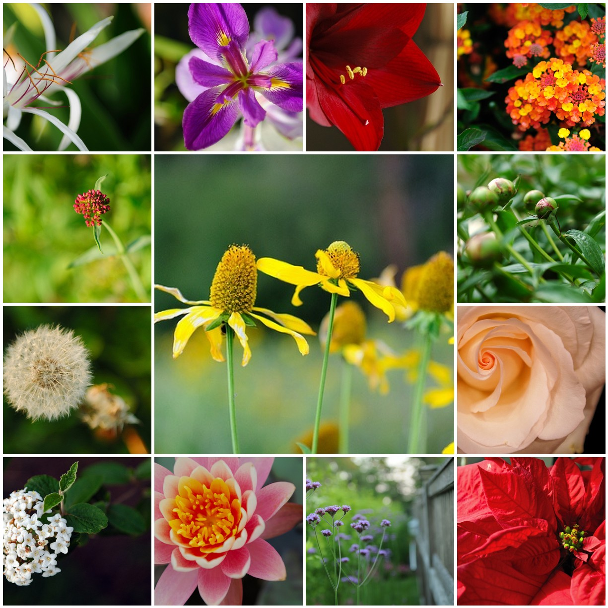 Mosaic Monday - Flower Collection