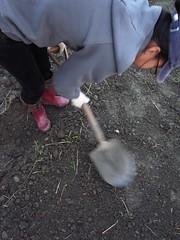 鳳林自然農田 川口由一自然農法的秧田 稻子育苗- 壓實苗床