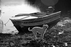 The Dog and the Canoe (mfsd.co) Tags: blackandwhite bw blanco dogs animals america colombia negro canoe perro pasto hund canoes perros canoa canoas nariño lacocha