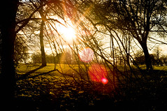 Here Comes the Sun... (Chris H#) Tags: trees winter light red orange green grass sunshine yellow shadows branches northamptonshire sunrays twigs sunbeams georgeharrison sunflare s3000 shadowslight rushden herecomesthesun nikond5000 rushdenhallpark