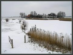 cold, peace and quiet... (Eber&Mars) Tags: winter snow cold farm nieve thenetherlands invierno frío overijssel boerderij paísesbajos graja 5photosaday blankenham