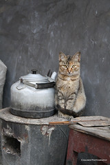 The Cat Warmer (Chauses) Tags: cat bestofcat goldstaraward