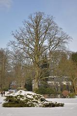 Single Tree (frits de vink) Tags: winter snow sneeuw nederland thenetherlands palace boom lucht paleis soestdijk gmt solitair royalgarden