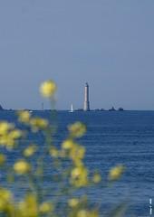 Phare (cadayf) Tags: lighthouse flower fleur landscape 22 seaside bretagne sillon britanny phare talbert