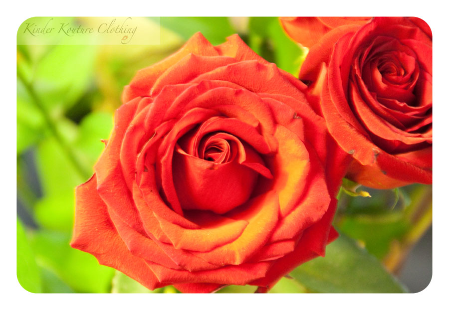 A rose is a rose, is a rose.....