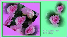 Stille Hoffnung (Dieter14 u.Anjalie157) Tags: rosa blumen lila frhling collagen abendrot hoffnung stimmungen lieblingsfoto anjalie157 grnlila fotomssig