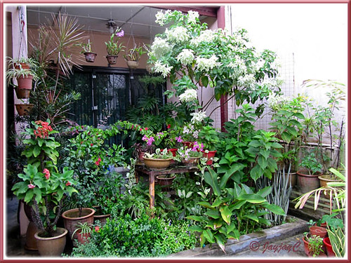 A section of our tropical garden in the front yard, February 2010