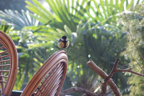 bird on bamboo