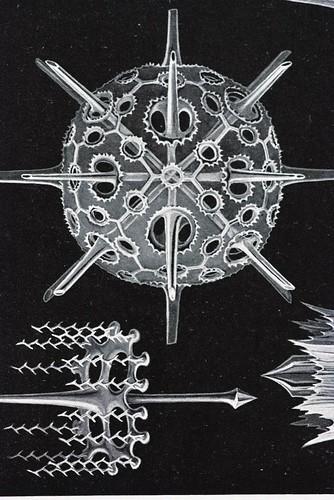 //Acanthophracta (detail),// Ernst Haeckel, Kunstformen der Natur. Chromolithograph 32 x 40 cm, Verlag des Bibliographischen Instituts, Leipzig 1899-1904. Photograph by D Dunlop.