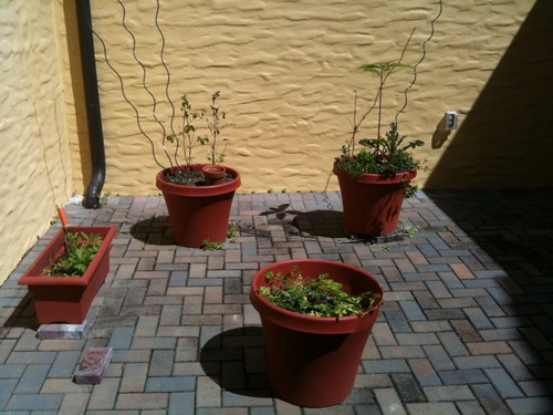 Sad Urban garden