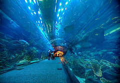 10000 Leagues Under Dubai (ADW44) Tags: photoshop aquarium dubai uae middleeast hdr lightroom photomatix dubaimall 1635f28 canon5dmarkii burjkhalifa