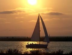 Sailing (lgal3824) Tags: ocean sunset sea sun beach sports water sunshine sport boats boat sailing maritime sail mywinners top20sea platinumheartaward goldstaraward flickrestrellas
