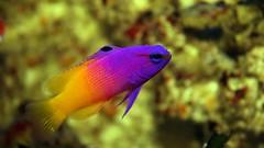 aquarium creative commons fisch fishtank picnik meerwasser grammaloreto königsfeenbarsch