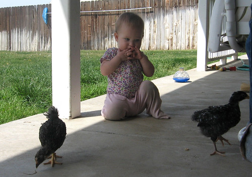 Holly likes small chickens