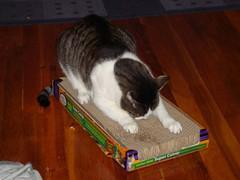 DSC04395 (Adam807) Tags: cat radish