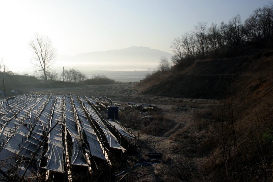 Ginseng plantation(2)