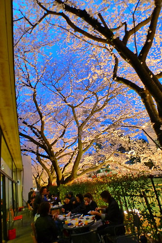 Dining under the cherry blossom tree