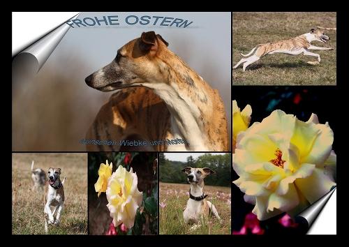 osternMonty2010