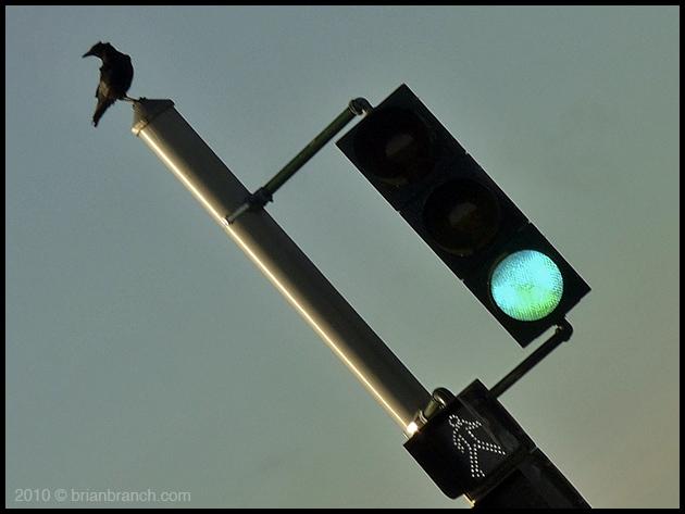 P1090300_trafsign_bird