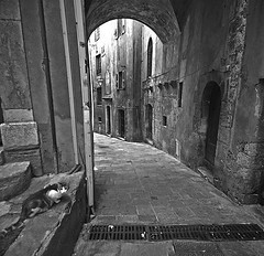 Grasse (soleá) Tags: street urban blackandwhite bw france cat square photography alley europe grasse alleycat soleá carmengonzalez thecatwhoturnedonandoff